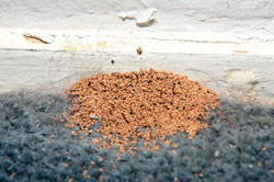 termite-pellets-frass